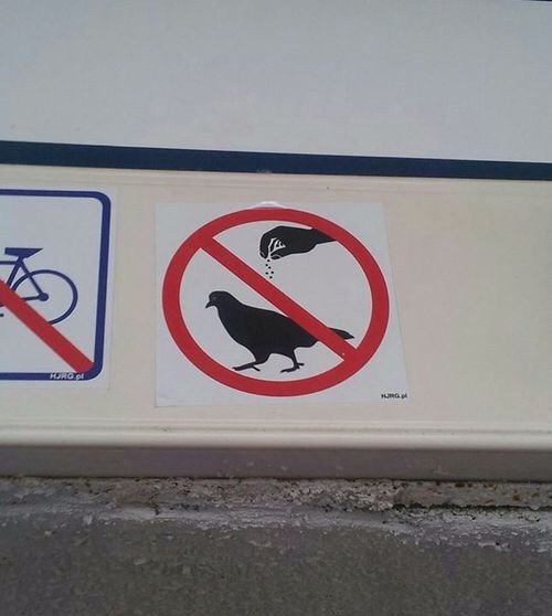 design-fail-season-birds